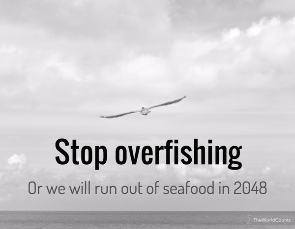 Stop overfishing or we run out in 2048
